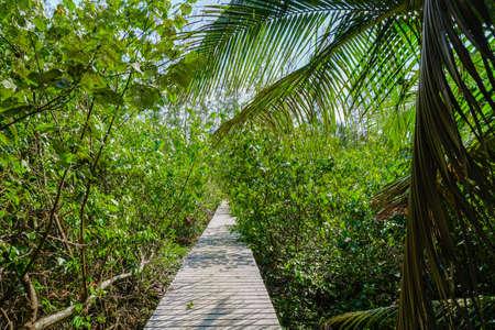ジャングルの中で木の道