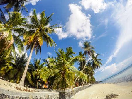 Rocky coastline with palm trees