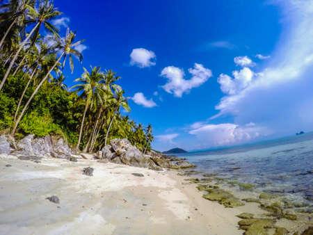rocky coastline: Rocky coastline with palm trees