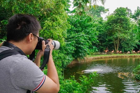 Zoo, Singapore - 3 November 2016 Man taking pictures of pink flamingo. World exploration Editorial