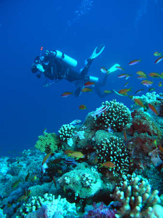 A diver floating over a coral reef in the Red Sea