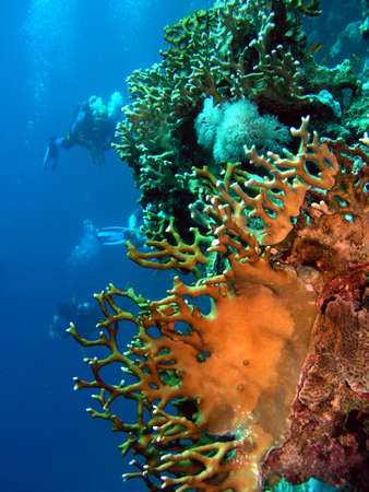 Coral and divers     Stock Photo