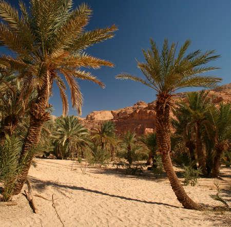 Oasis, White canyon-Egypt