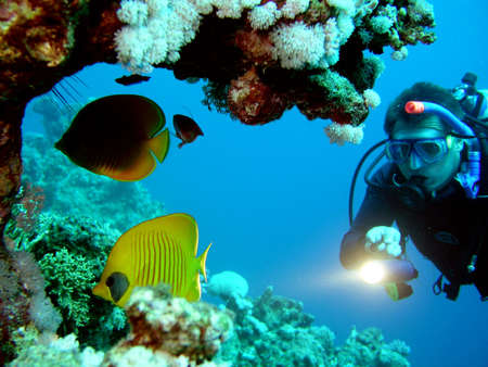 Diver and butterflyfish Stock Photo