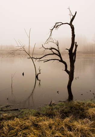 Foggy morning on coast of lake photo