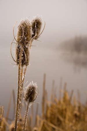 cane creek: Foggy morning on coast of lake