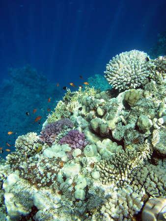 The underwater world and sunlight   Stock Photo
