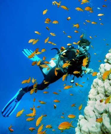 Woman Scuba Diver and school of Fish