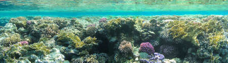 The underwater world and sunlight