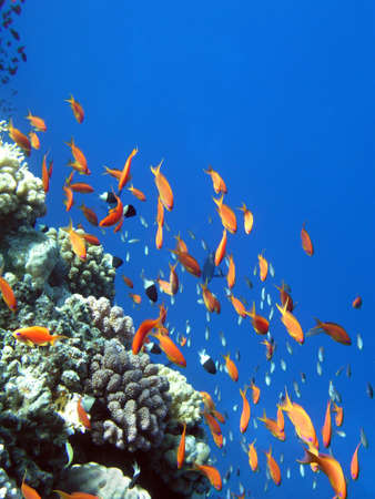Photo of coral colony      Stock Photo - 3700128