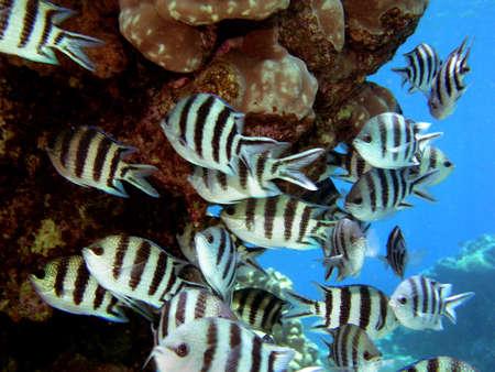 Fish school Stock Photo - 3700131