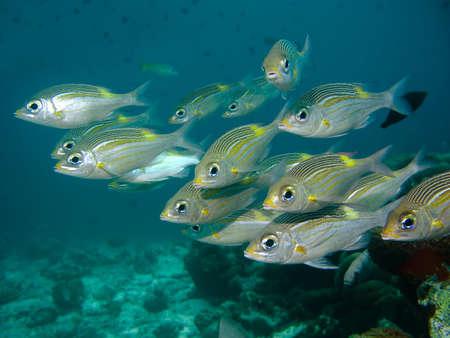 Fish school Stock Photo - 3700125