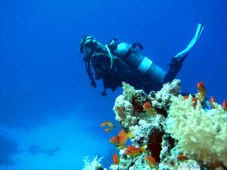 Woman scuba diver and fishes         Stock Photo