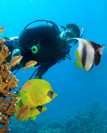 Diver and butterflyfishes     Stock Photo