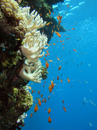 Corals and fishes       Stock Photo