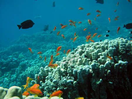 Underwater life Stock Photo - 4188848