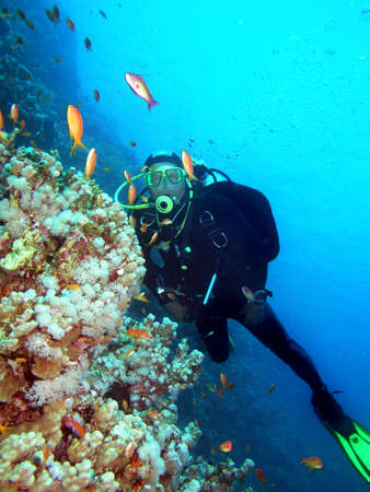 Diver by coral reef      Stock Photo - 4188849