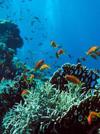 coral colony: Foto di colonie di corallo Archivio Fotografico