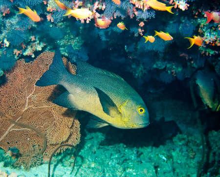Underwater life  Stock Photo - 4233869