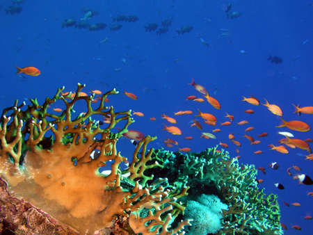 Photo of a coral colony Stock Photo - 4579429