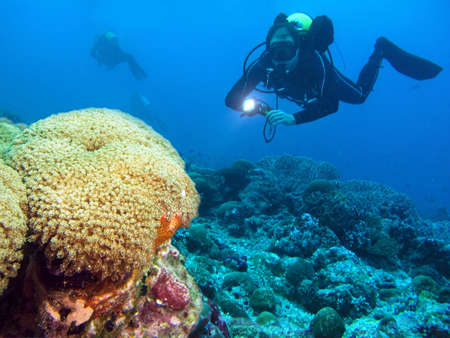 A diver floating over a coral reef         Stock Photo