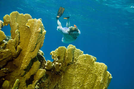 Woman snorkeling in Red sea photo