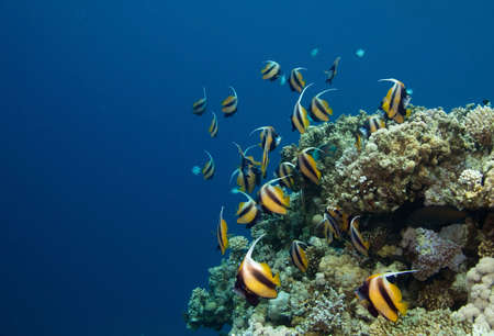 coral fishes Stock Photo