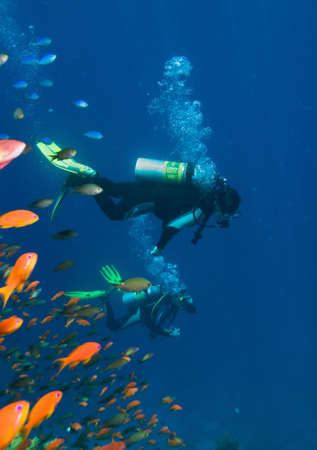 A divers floating over a coral reef in the Red Sea