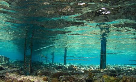 Fish below bridge
