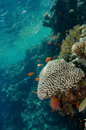 of coral colony Stock Photo
