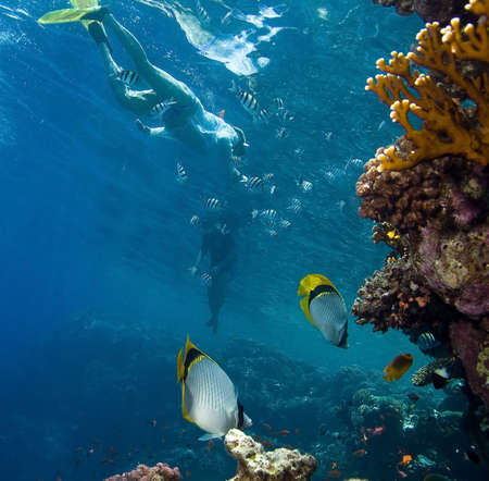 Fish, corals and snorkeling peaple photo