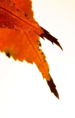 Macro on Autumn Foliage