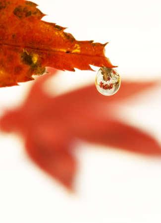 leaf, macro shot, with water drop