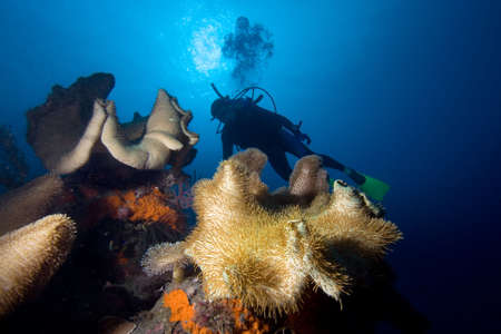 Diver and corals Stock Photo