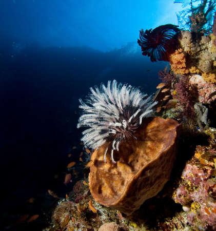 Underwater life Stock Photo - 7485036