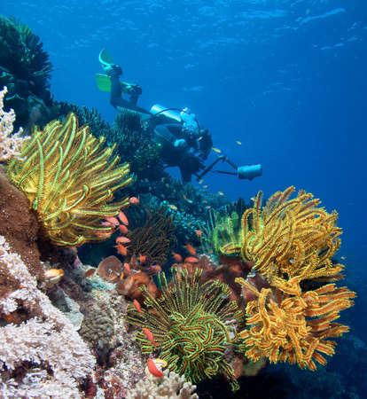indonesia people: Diver with underwater camera by coral reef