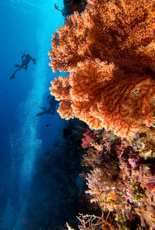 Divers by coral reef Stock Photo - 8285404