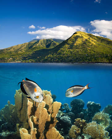 Underwater life in tropical paradise