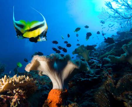 Underwater life Stock Photo - 9044748