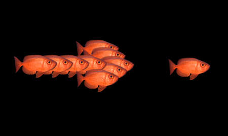 Red fish - isolated on black background  Stock Photo