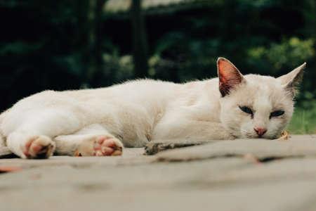 cutie: Cutie Kitten Stock Photo