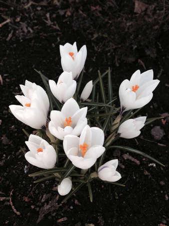 white: White Flower