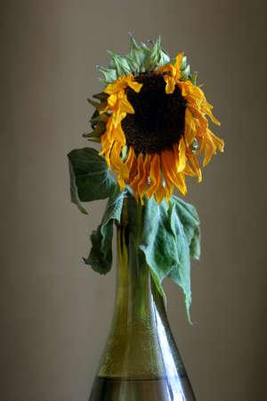 Sunflower in a green bottle photo