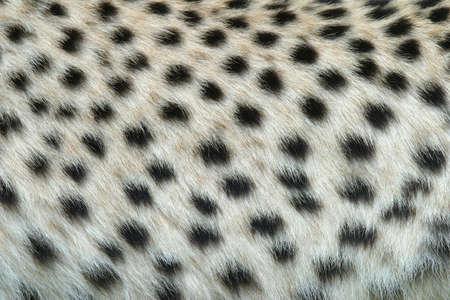 mottle: Sample of the leopard