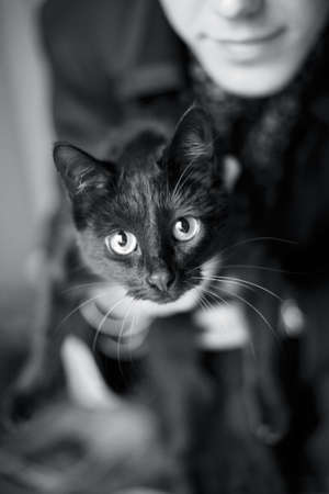 The image of the person which holds a cat. A muzzle cat in sharpness, the rest is dim photo