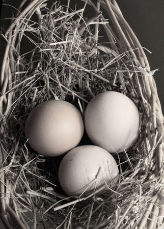 latent: Three brown eggs latent in a dry grass