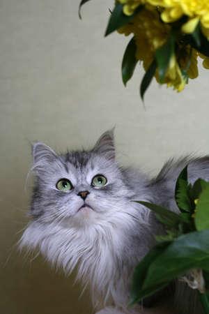 Portr�t der Katze - M�dchen mit Blumen