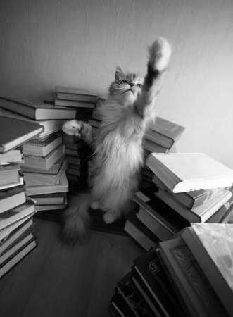 Playing grey kitten among sheafs different books Stock Photo - 1173076