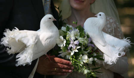Wedding pigeons in hands of a newly-married couple photo