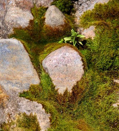 arcane: Old mossy stones close-up